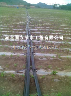 河北国农新型滴灌带