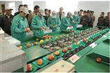 XGJ-SZZ百香果选果机,百香果自动称重分选机,水果分级重量选果机
