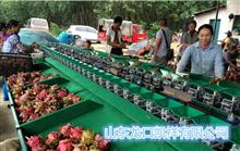 XGJ-SZZ石榴选果机,石榴自动称重分选机,水果分级重量选果机
