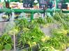 小型超市用喷雾加湿器使用效果怎么样_喷雾加湿器_果蔬保鲜加湿器