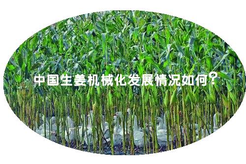 中国生姜机械化发展情况如何?